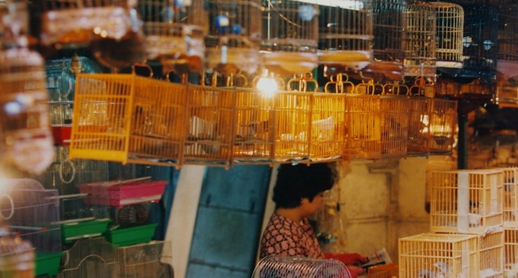 The Hong Kong Bird Market